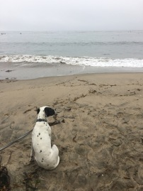 Dog on the sand